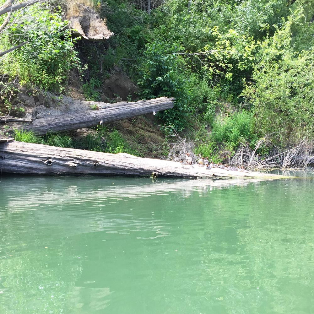 russian-river-canoe-2015-17