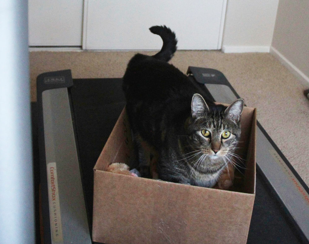11-tabs-cat-treadmill-box