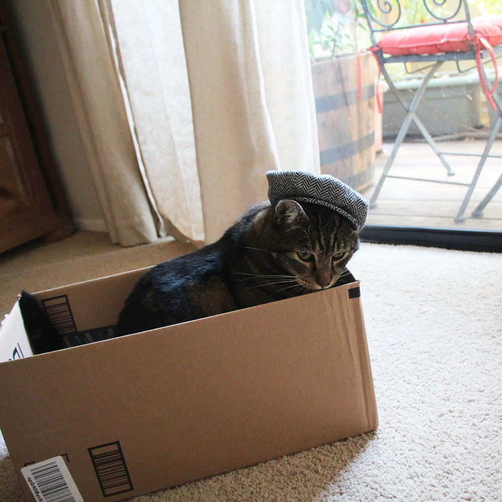 12-tabs-cat-box-newsboy-cap