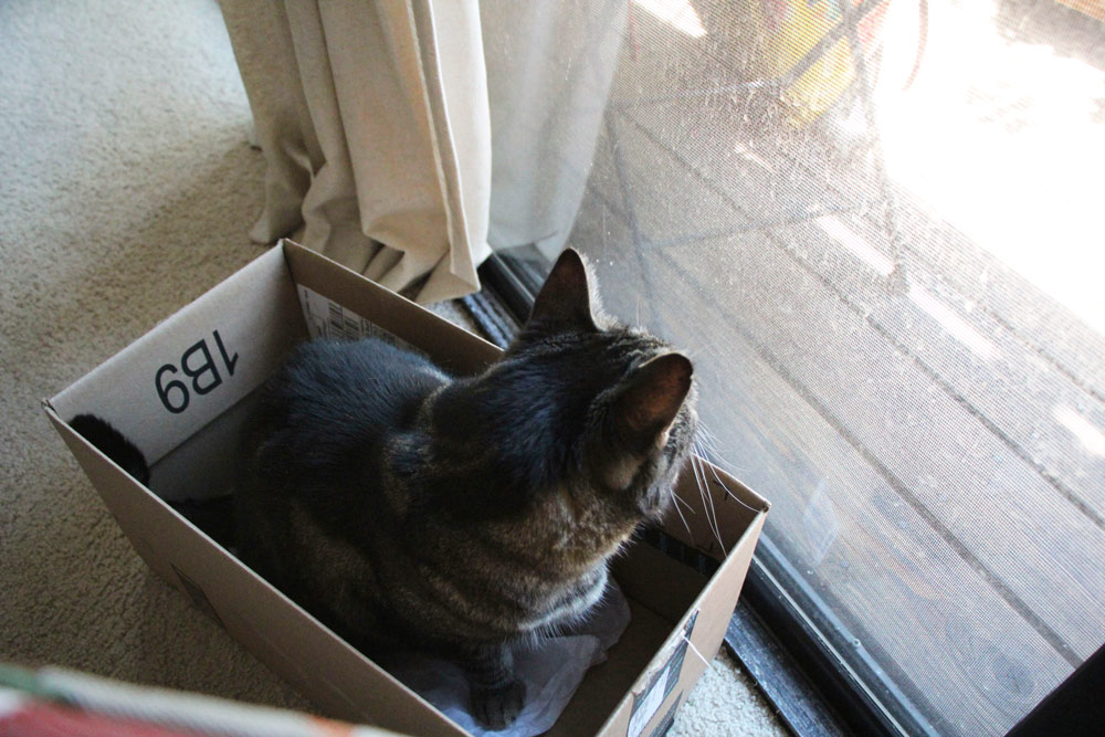 14-tabs-cat-box-outside
