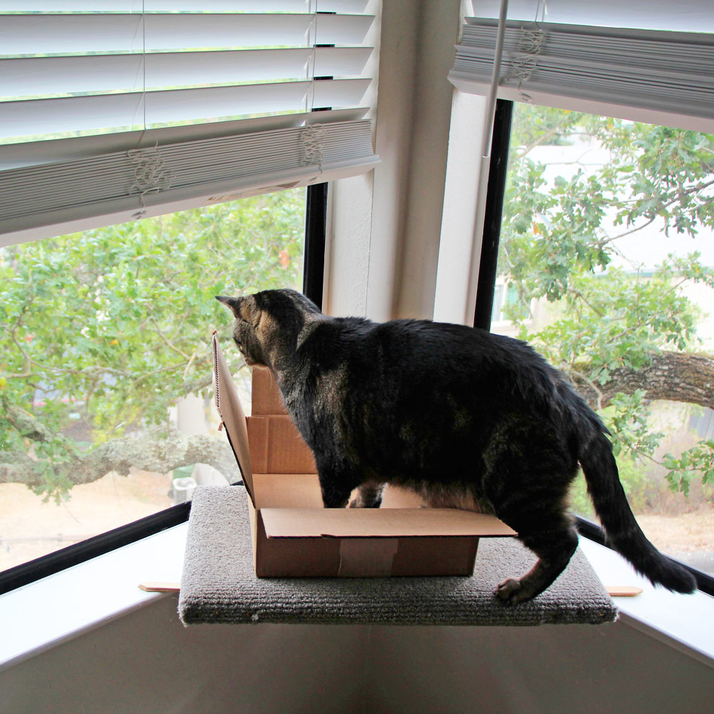 6-tabs-cat-box-windowsill