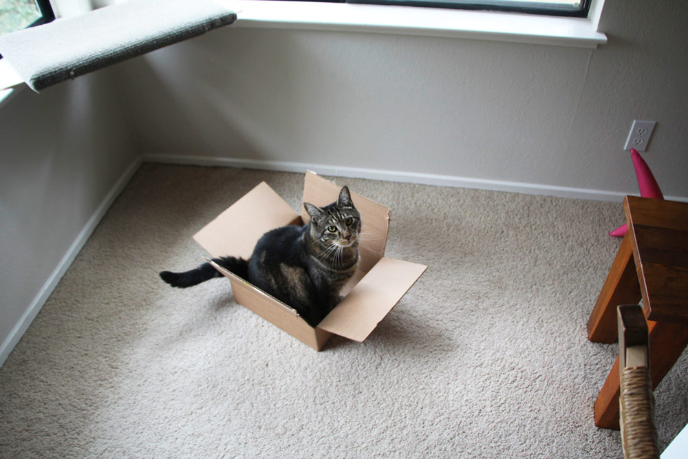 8-tabs-cat-tail-box