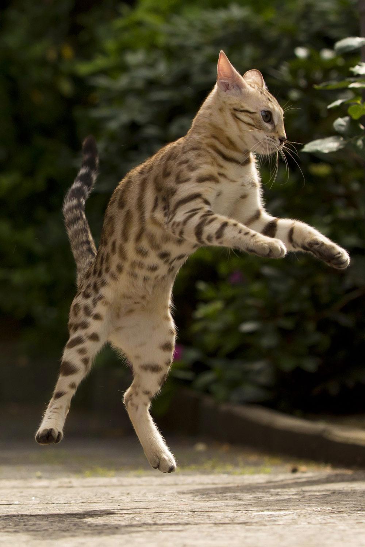 kitten-parkour