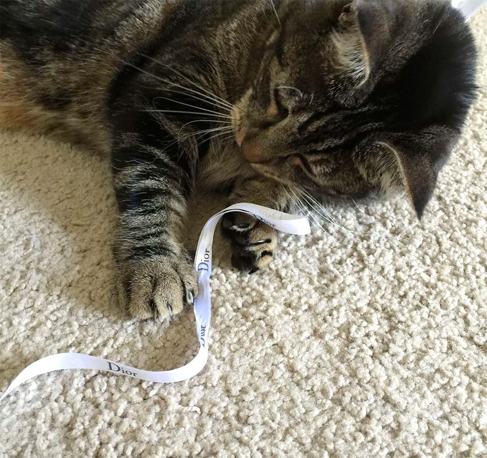 """I only play with Dior ribbons."""
