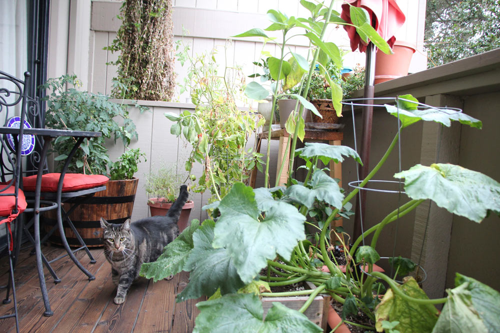 tabs-the-cat-summer-2015-10