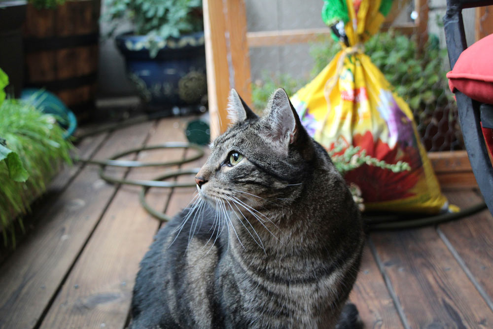 tabs-the-cat-summer-2015-13
