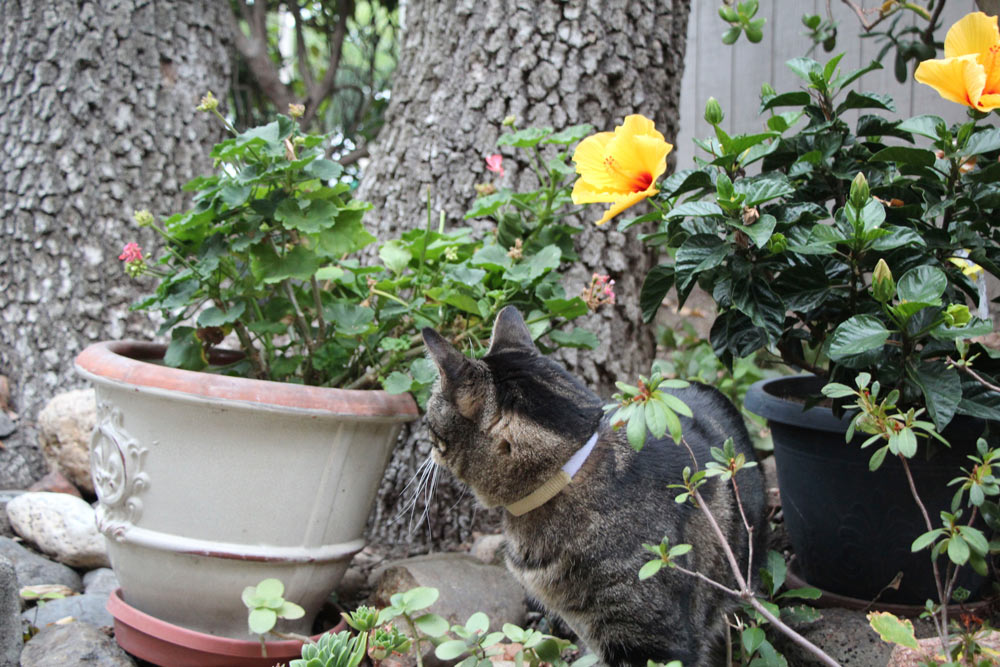 tabs-the-cat-summer-2015-18