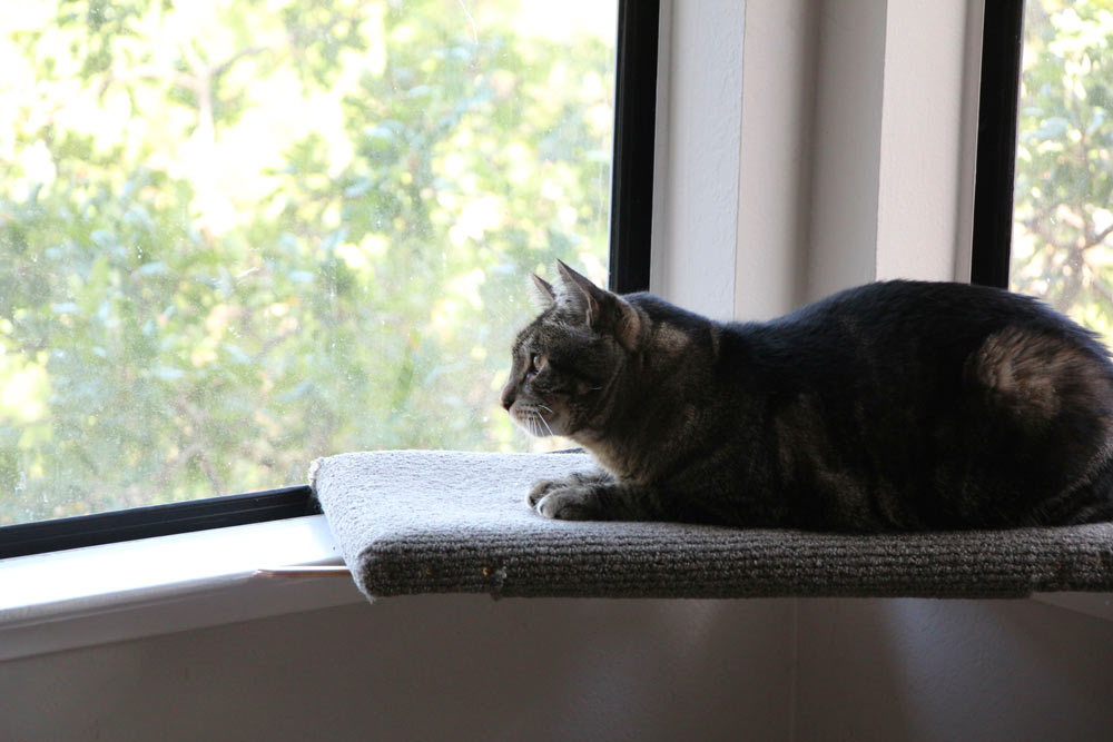 tabs-the-cat-summer-2015-4