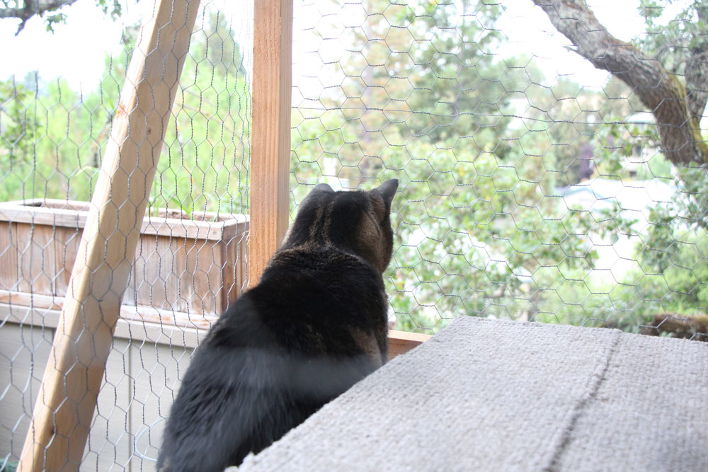 tabs-the-cat-summer-2015-6