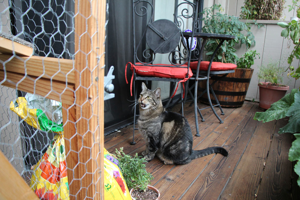 tabs-the-cat-summer-2015-8