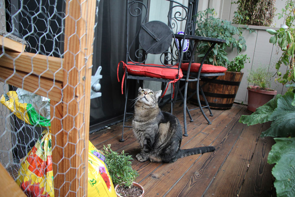 tabs-the-cat-summer-2015-9