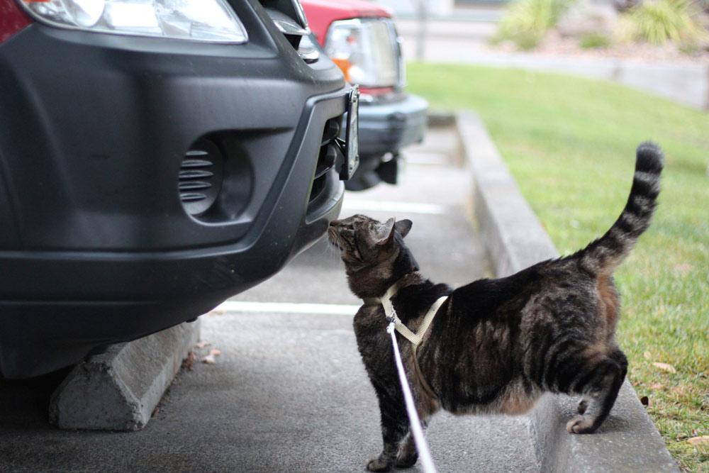 1-tabs-cat-summer-2015