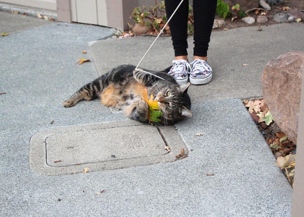 19-tabs-cat-model