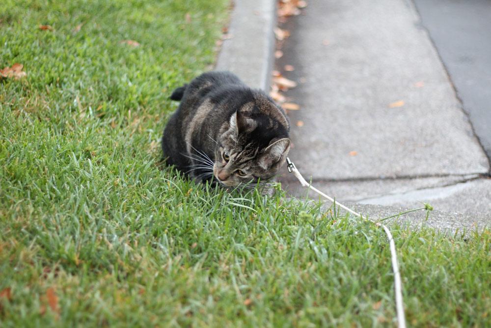 3-tabs-cat-summer-2015