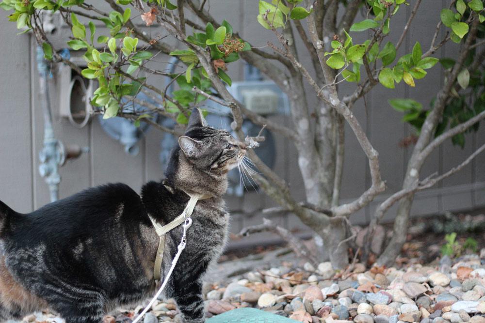 5-tabs-cat-summer-2015