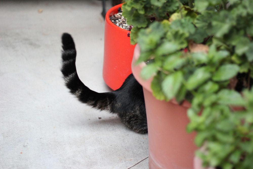 7-tabs-cat-summer-2015