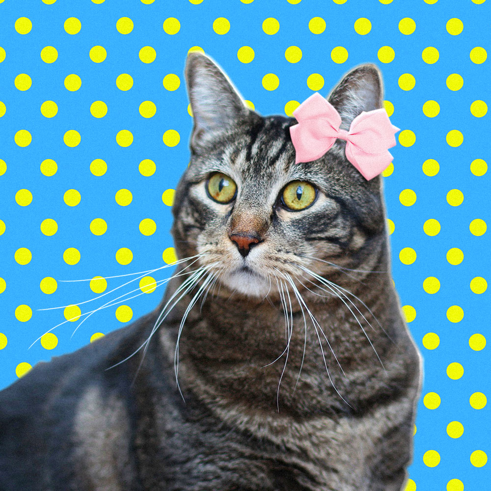 tabs-kitty-modeling-yellow-polka-dots