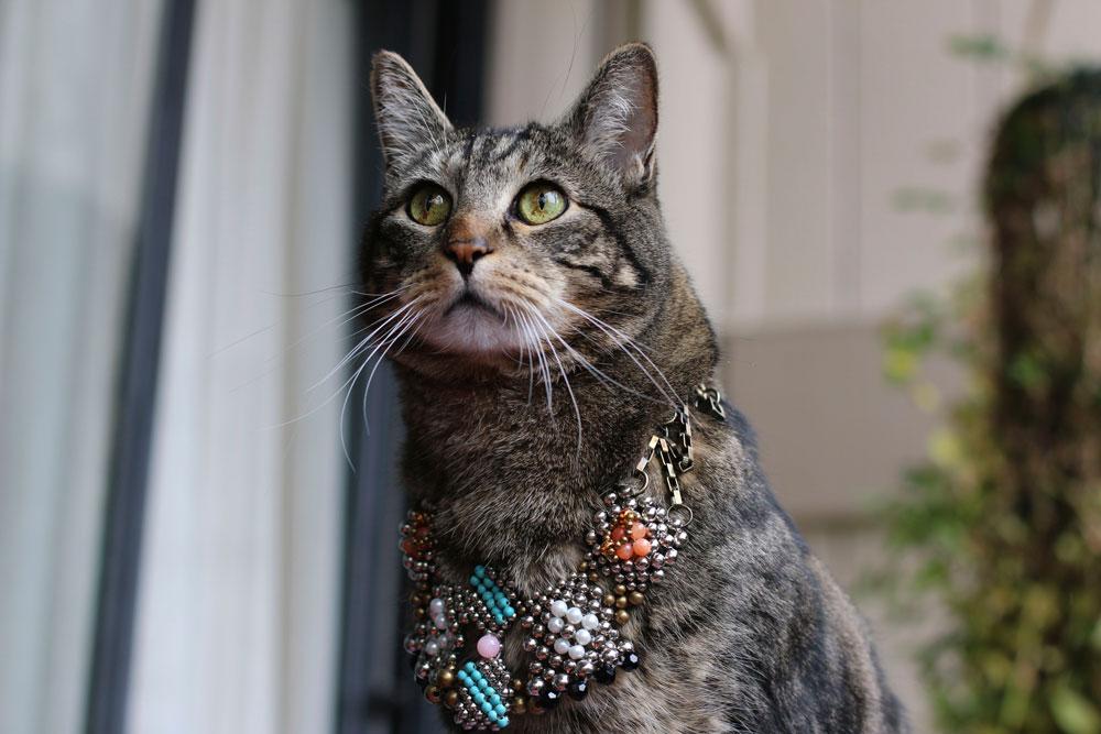 1-tabs-the-cat-memories