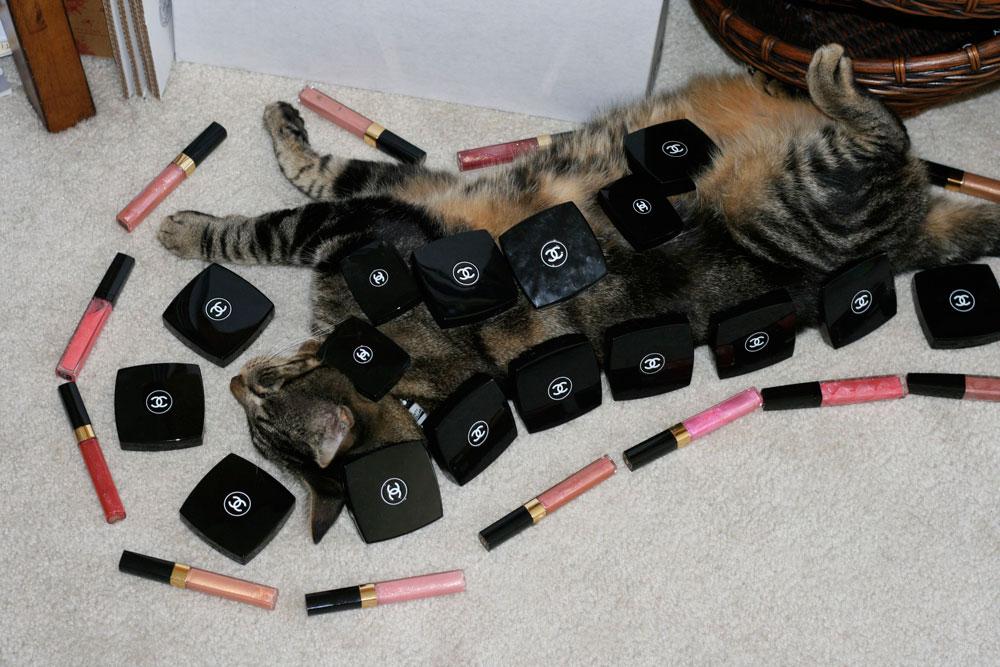 13-tabs-the-cat-memories