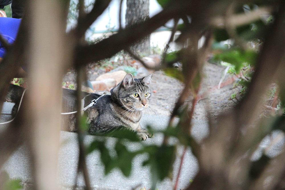 14-tabs-cat-model