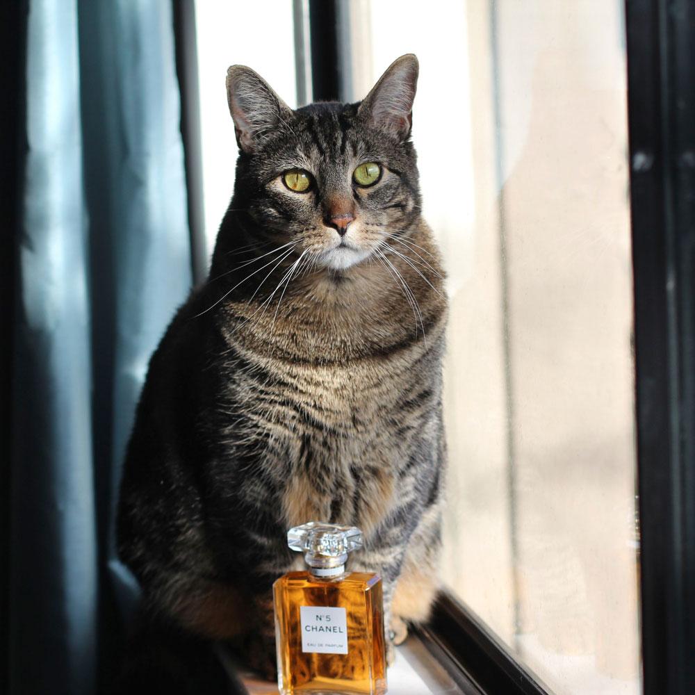 14-tabs-the-cat-memories