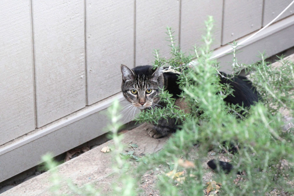 17-tabs-cat-model