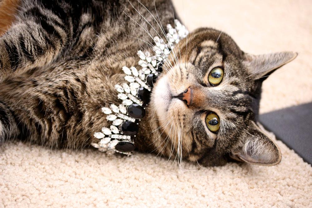 4-tabs-the-cat-memories