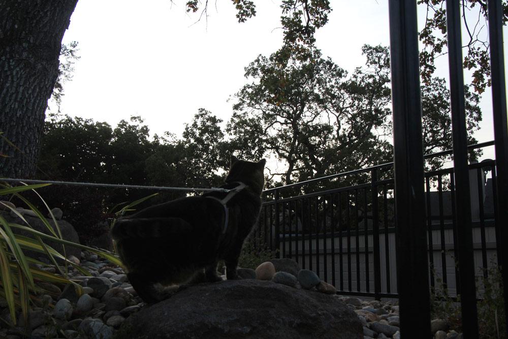 5-tabs-cat-model