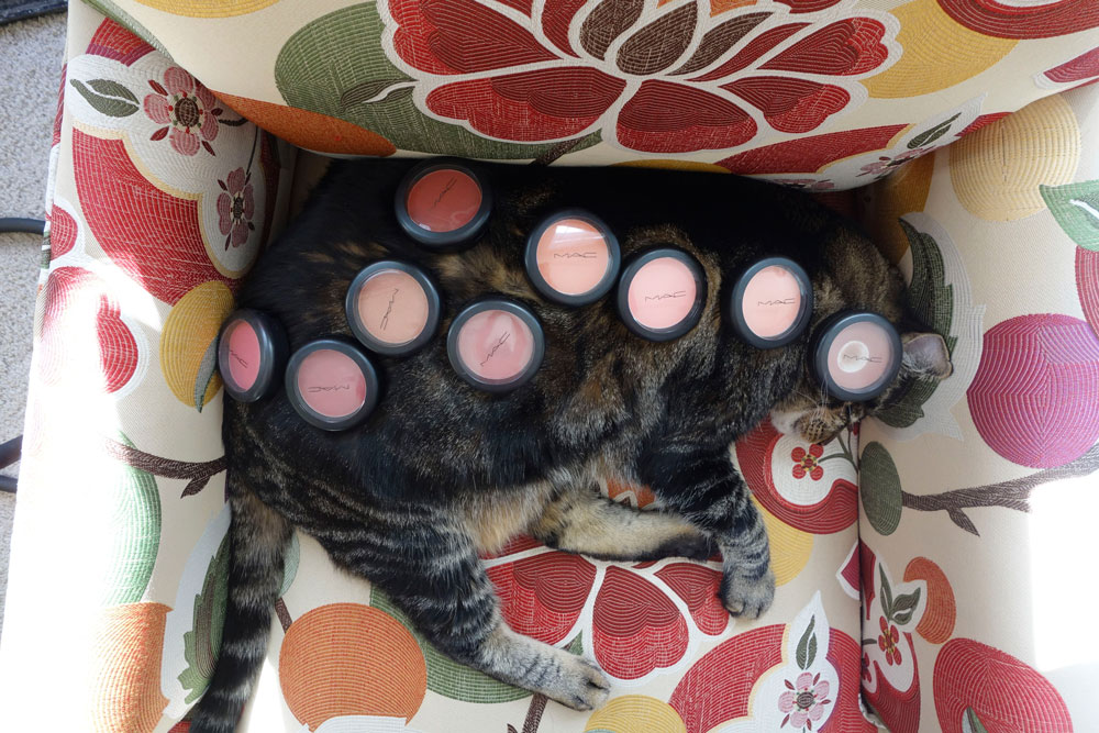 5-tabs-the-cat-memories