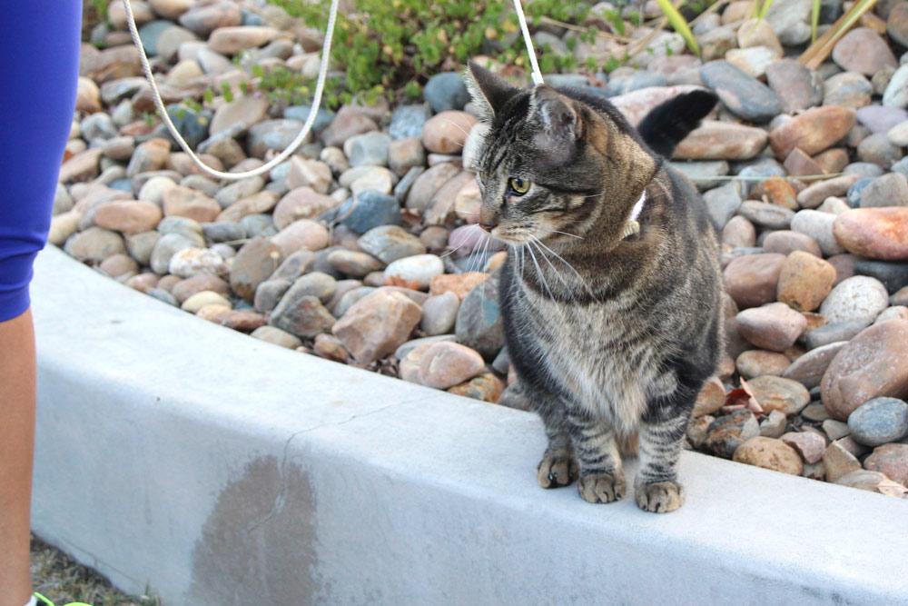 6-tabs-cat-model