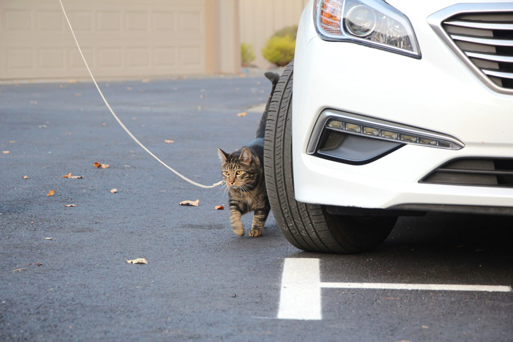 7-tabs-cat-model