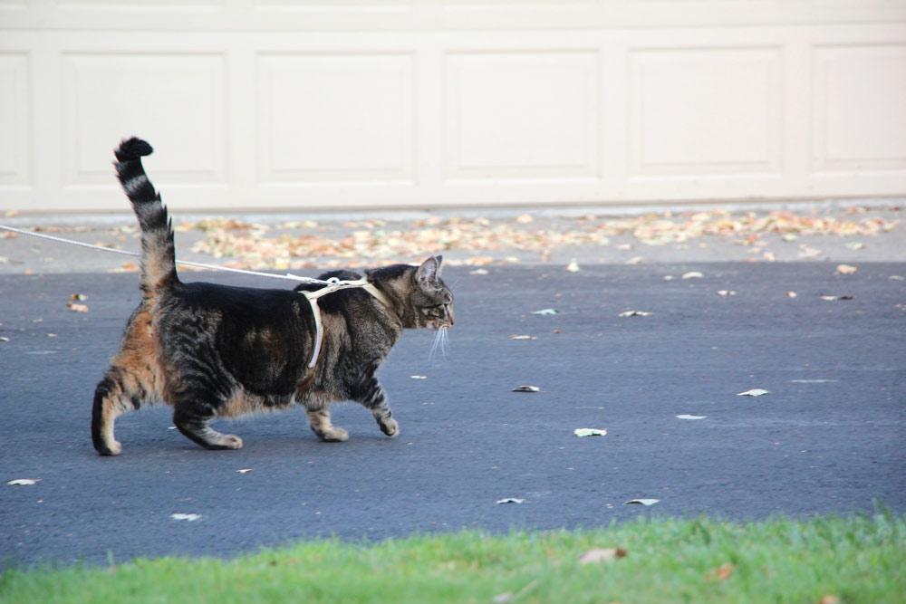 8-tabs-cat-model