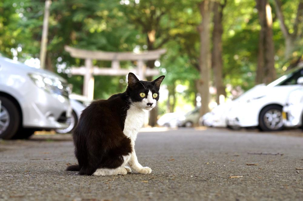 tabs-tuxedo-cat-2