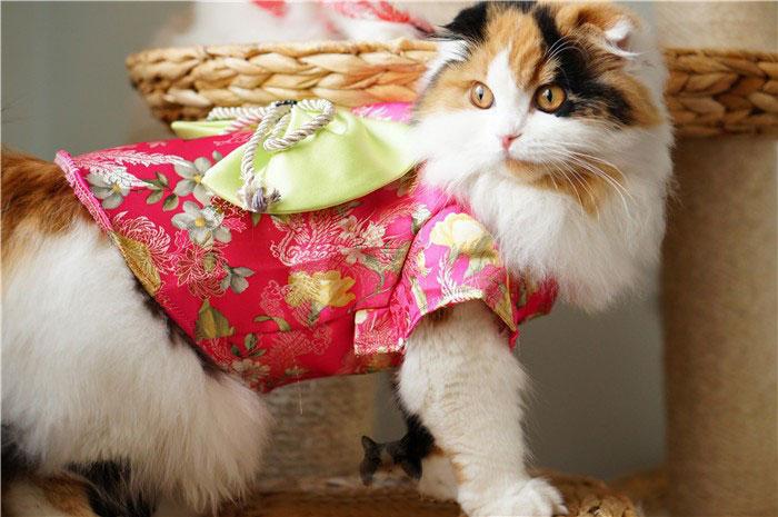1-cat-kimono-costume