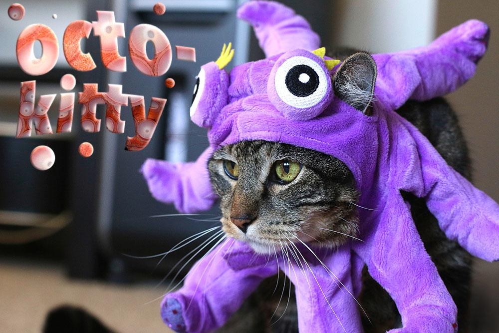 1-tabs-halloween-cat-costume