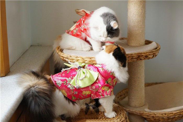 2-cat-kimono-costume