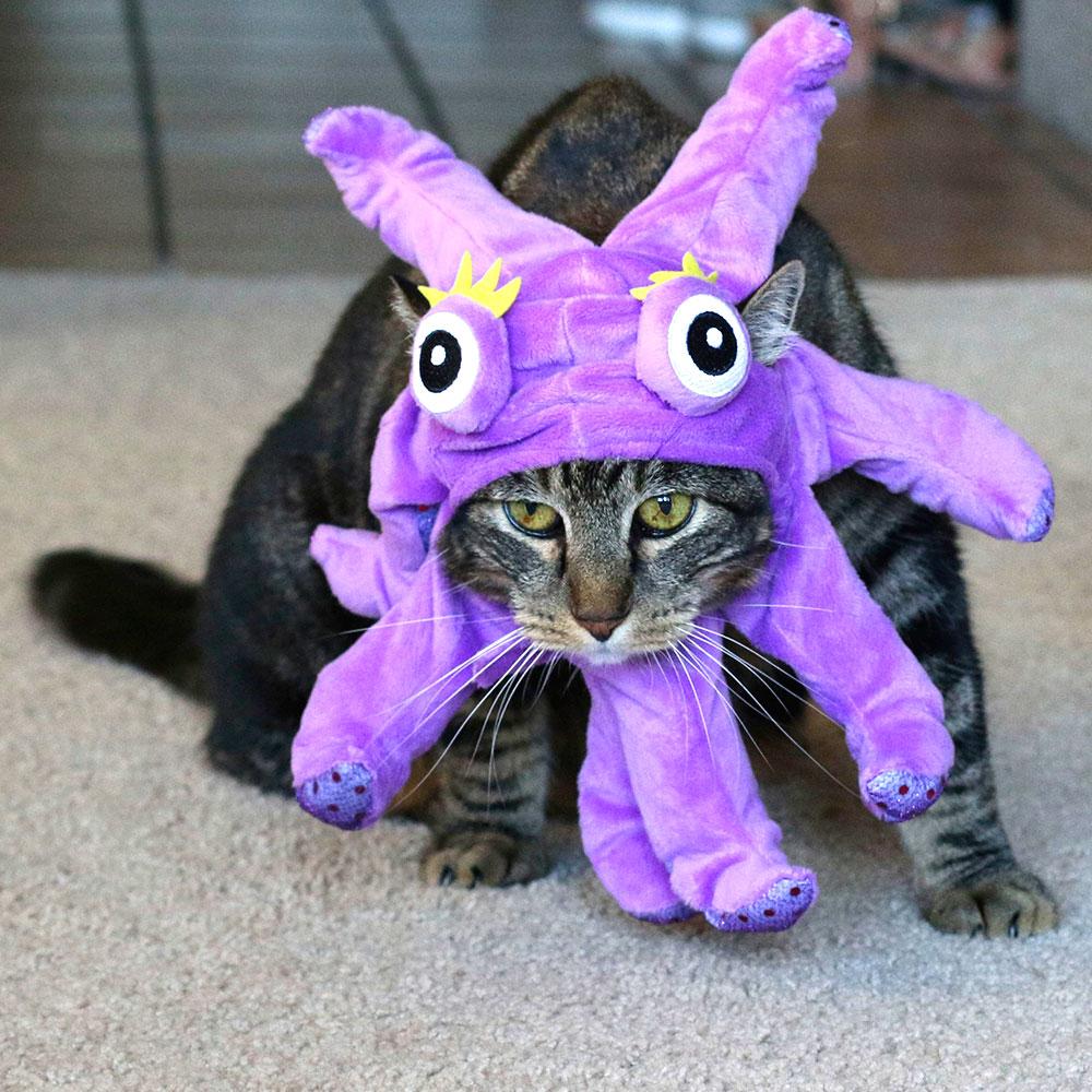 2-tabs-halloween-cat-costume