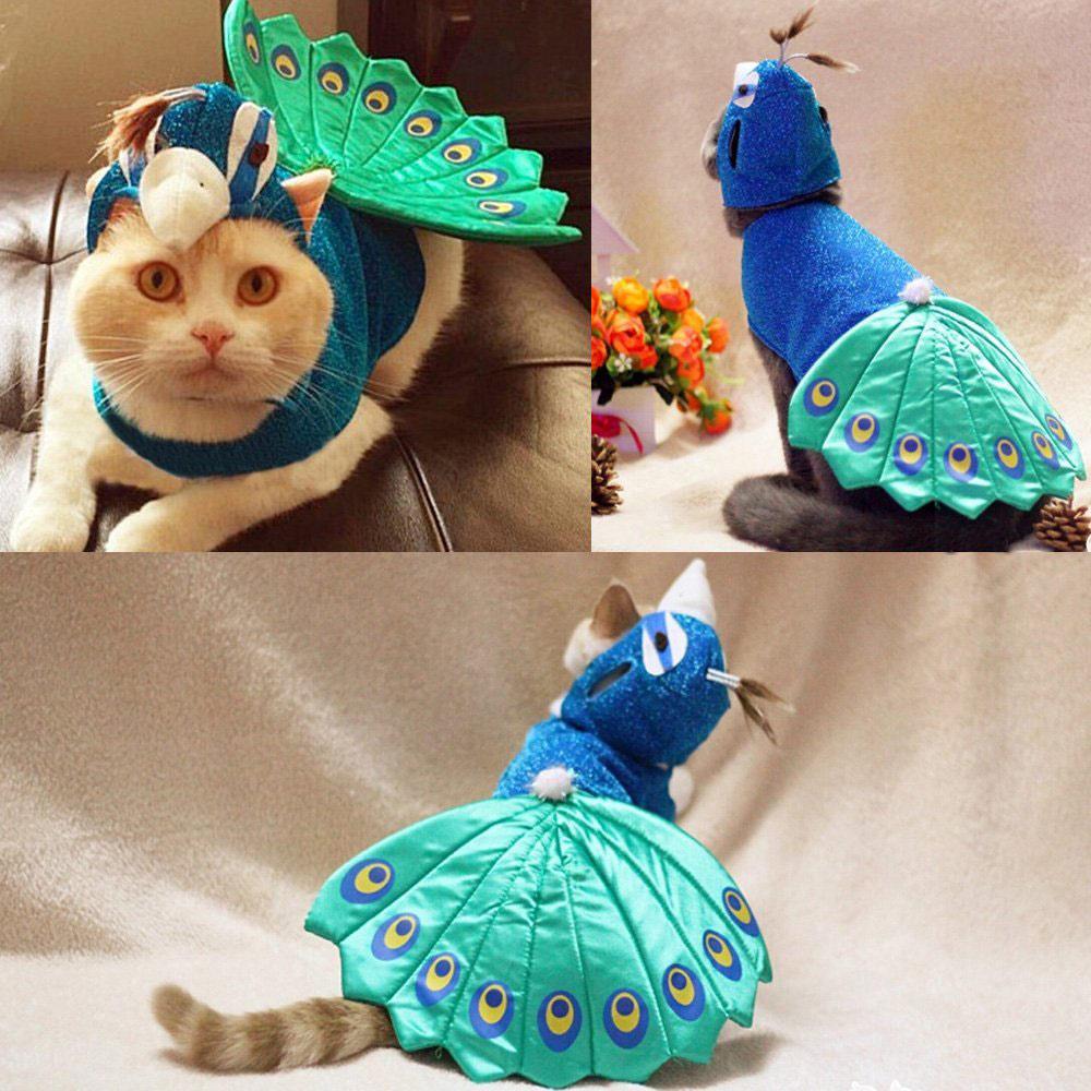 peacock-cat