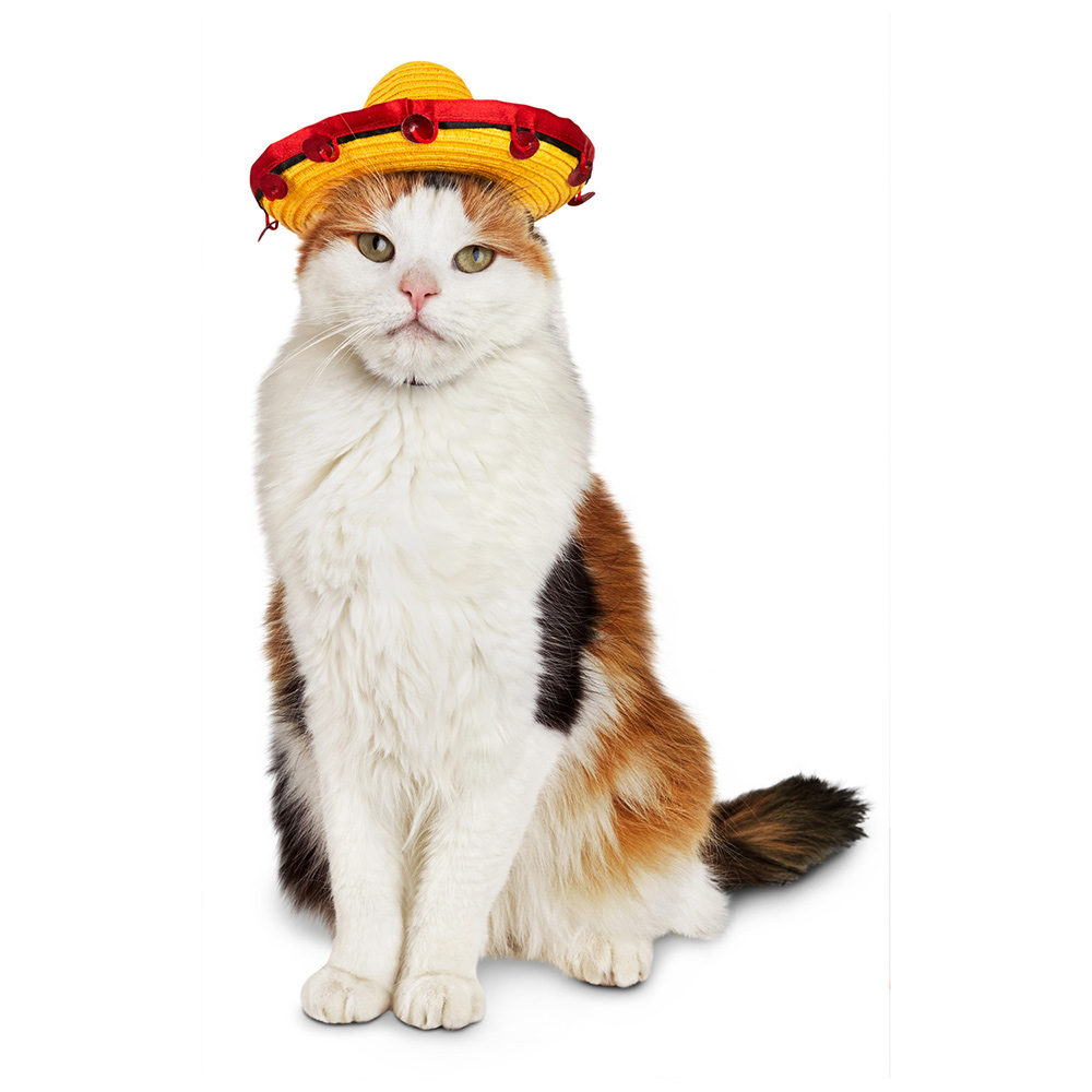 sombrero-cat