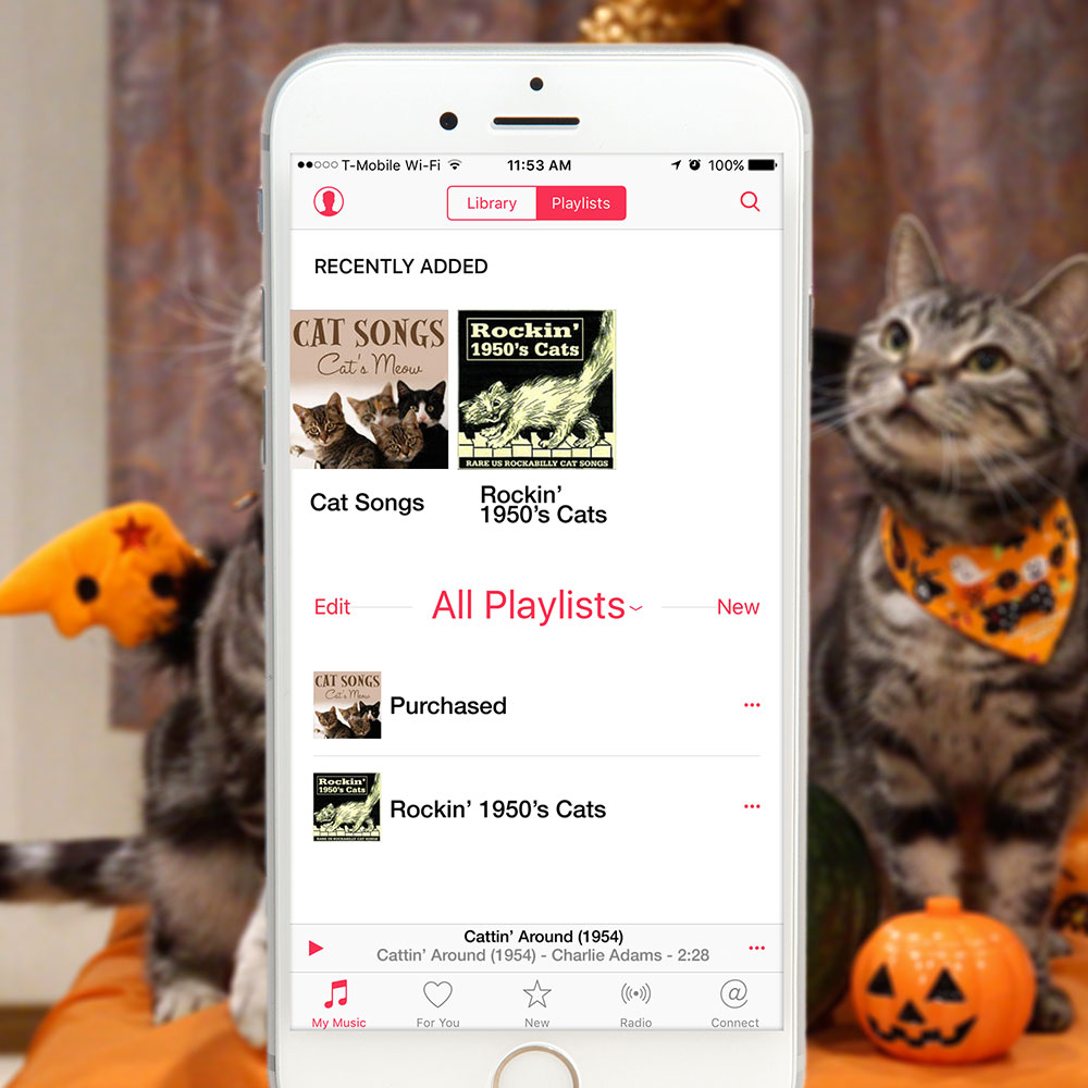 tabs-cat-songs-playlist-halloween-2015
