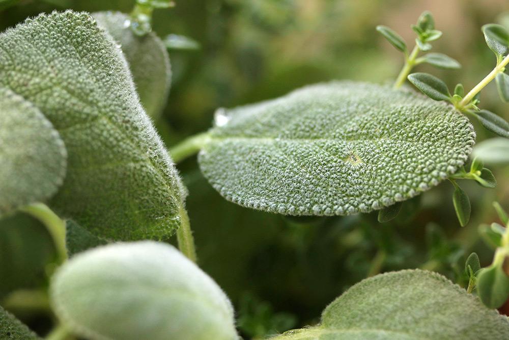 trader-joes-potted-herb-garden-3