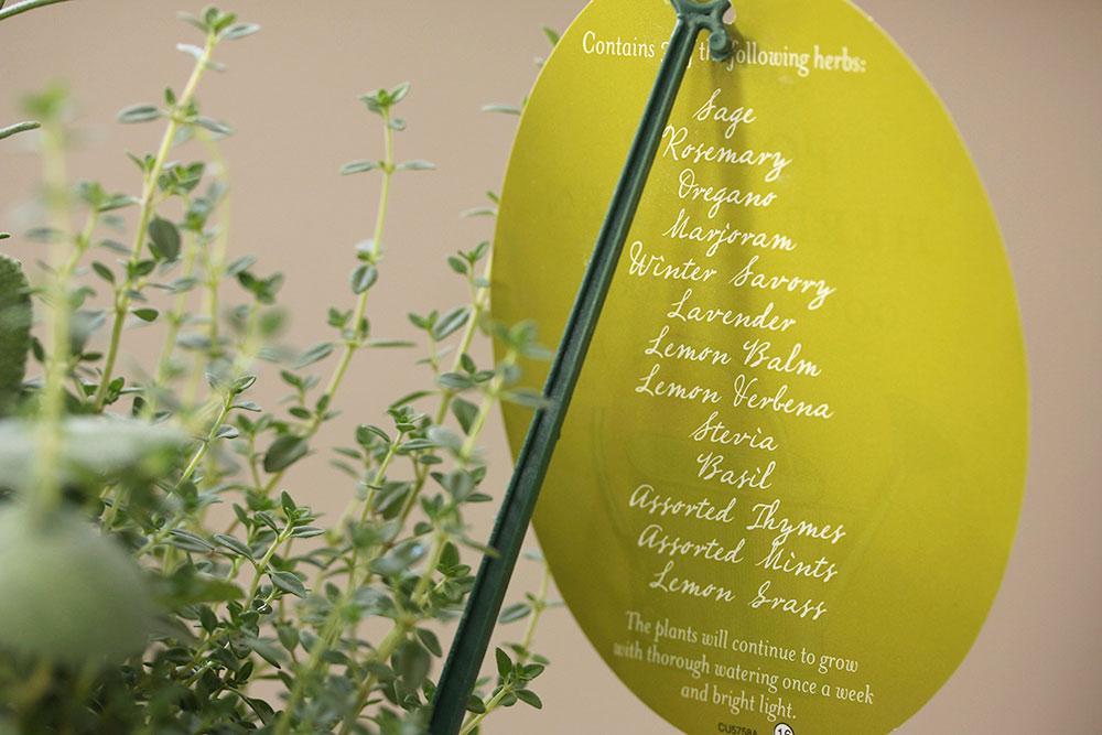 trader-joes-potted-herb-garden-6