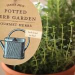 trader-joes-potted-herb-garden-890