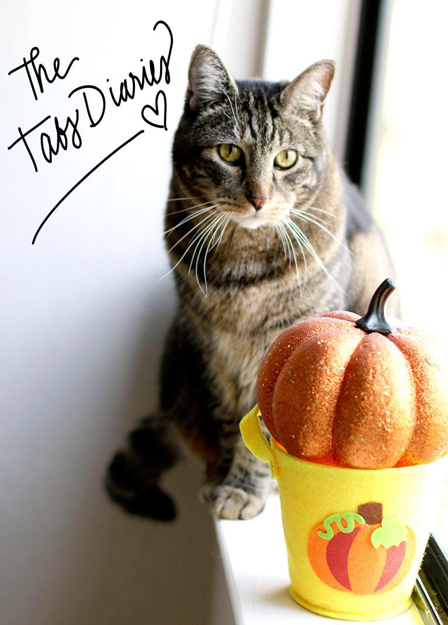 tabs-with-glitter-pumpkin-top