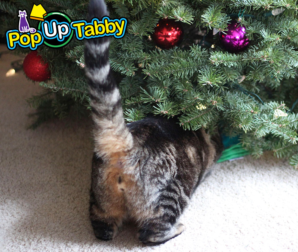 tabs-christmas-tree-water