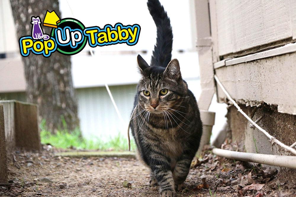tabs-husky-popup-video