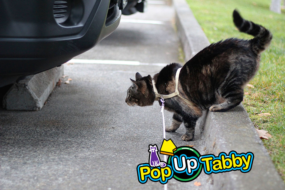 tabs-inspecting-cars