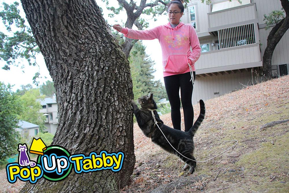 tabs-tree-climb-final