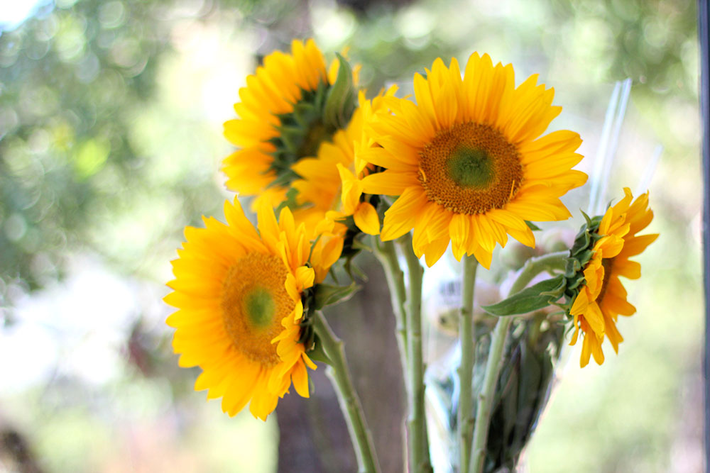 012516-sunflowers-monday-poll