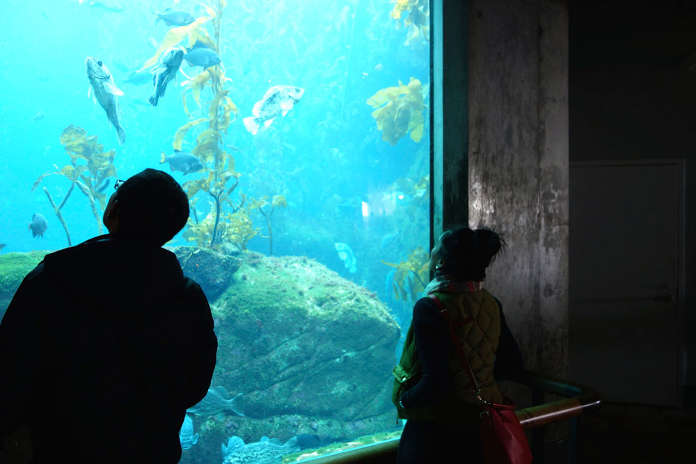 The Monterey Bay Aquarium and Carmel, California